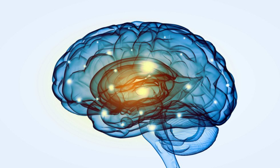 Bessere Vernetzung von Gehirnarealen schon nach kurzem Training